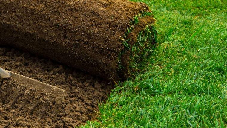 Spotless Lawn Grass